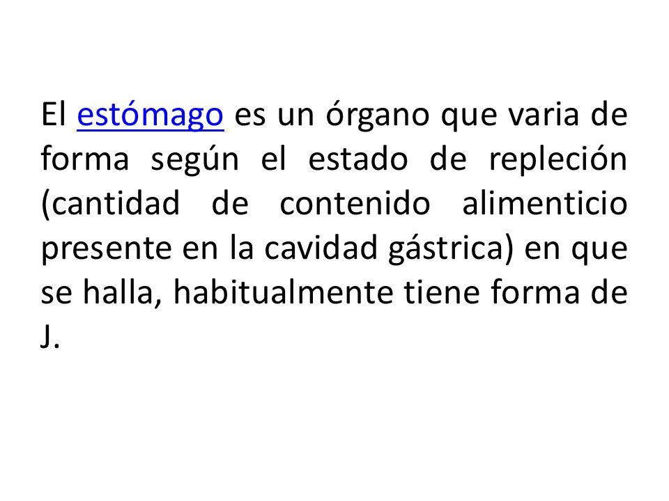 El estómago es un órgano que varia de forma según el estado de repleción (cantidad de contenido alimenticio presente en la cavidad gástrica) en que se halla, habitualmente tiene forma de J.