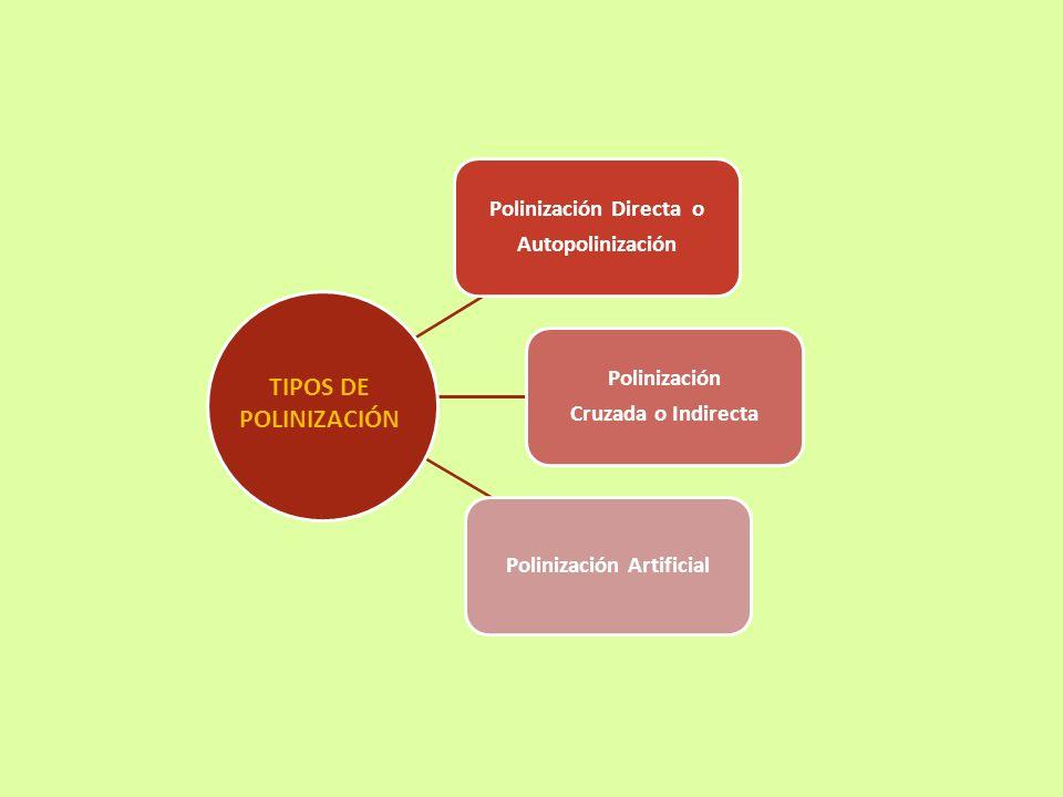 Polinización Directa o Polinización Artificial