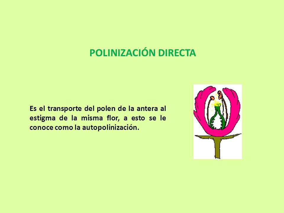 POLINIZACIÓN DIRECTA Es el transporte del polen de la antera al estigma de la misma flor, a esto se le conoce como la autopolinización.