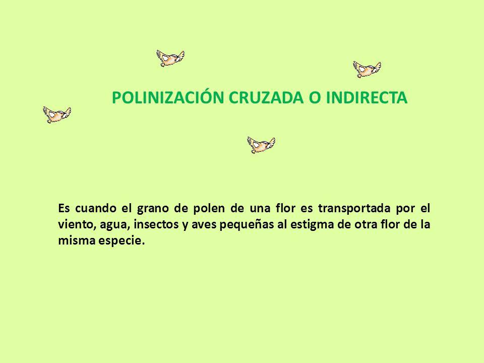 POLINIZACIÓN CRUZADA O INDIRECTA