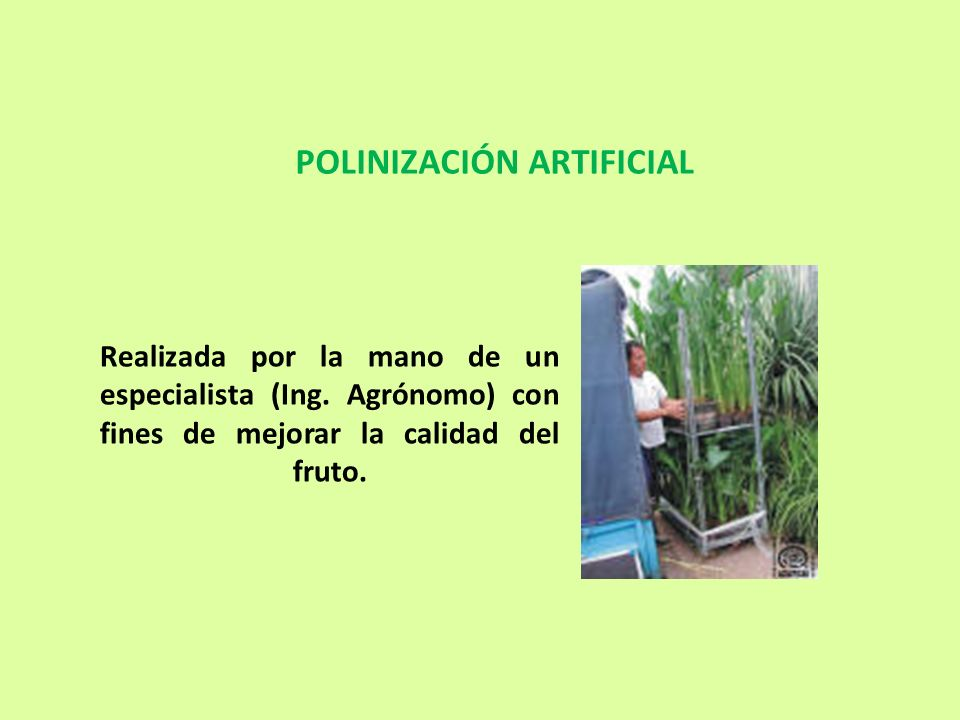 POLINIZACIÓN ARTIFICIAL