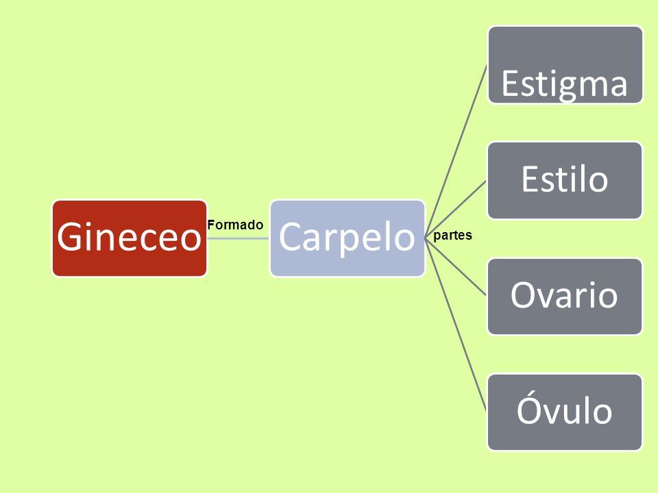 Gineceo Carpelo Estigma Estilo Ovario Óvulo Formado partes