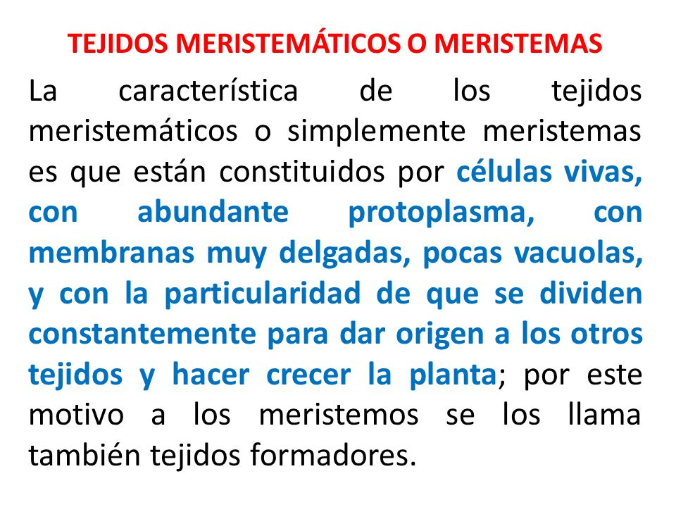 TEJIDOS MERISTEMÁTICOS O MERISTEMAS
