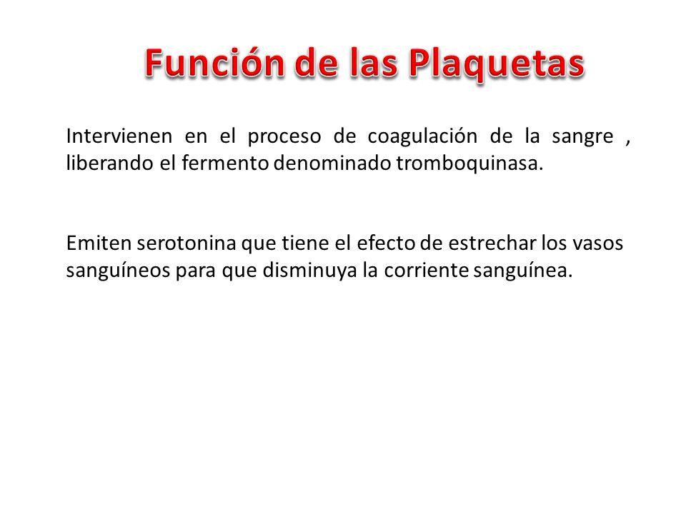 Función de las Plaquetas
