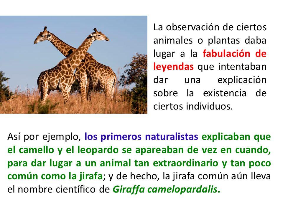 La observación de ciertos animales o plantas daba lugar a la fabulación de leyendas que intentaban dar una explicación sobre la existencia de ciertos individuos.