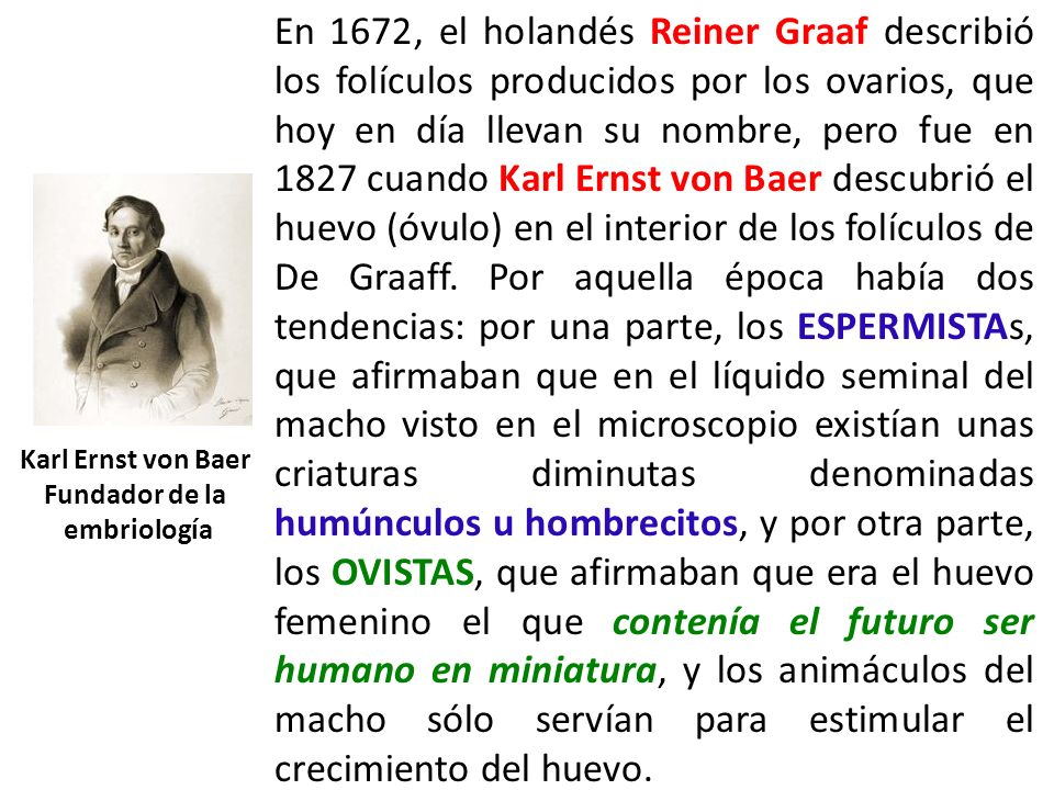 En 1672, el holandés Reiner Graaf describió los folículos producidos por los ovarios, que hoy en día llevan su nombre, pero fue en 1827 cuando Karl Ernst von Baer descubrió el huevo (óvulo) en el interior de los folículos de De Graaff. Por aquella época había dos tendencias: por una parte, los ESPERMISTAs, que afirmaban que en el líquido seminal del macho visto en el microscopio existían unas criaturas diminutas denominadas humúnculos u hombrecitos, y por otra parte, los OVISTAS, que afirmaban que era el huevo femenino el que contenía el futuro ser humano en miniatura, y los animáculos del macho sólo servían para estimular el crecimiento del huevo.