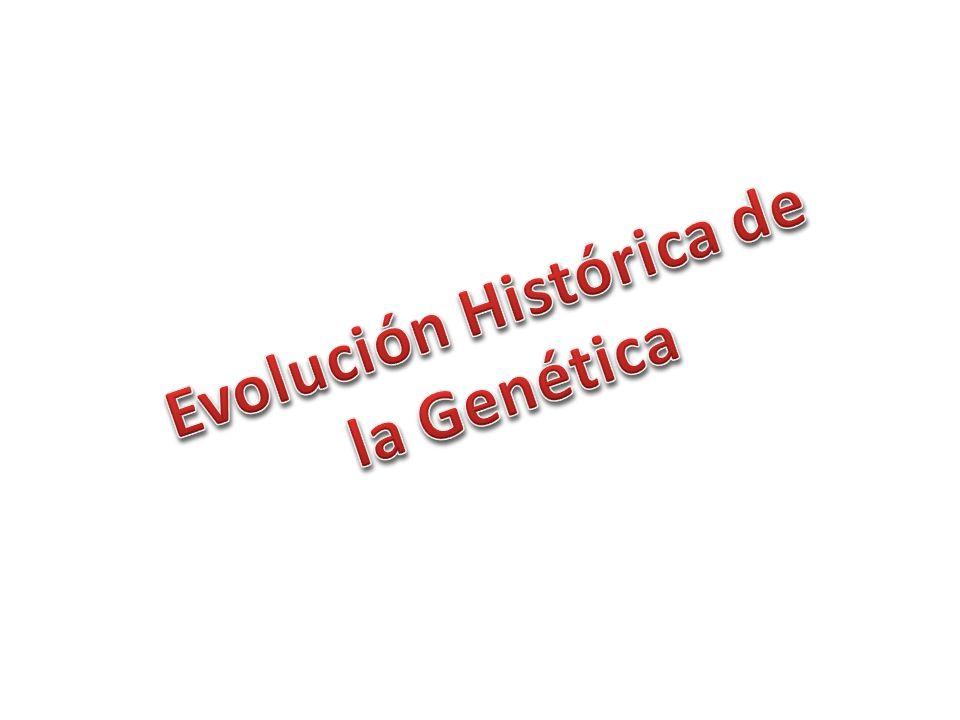 Evolución Histórica de