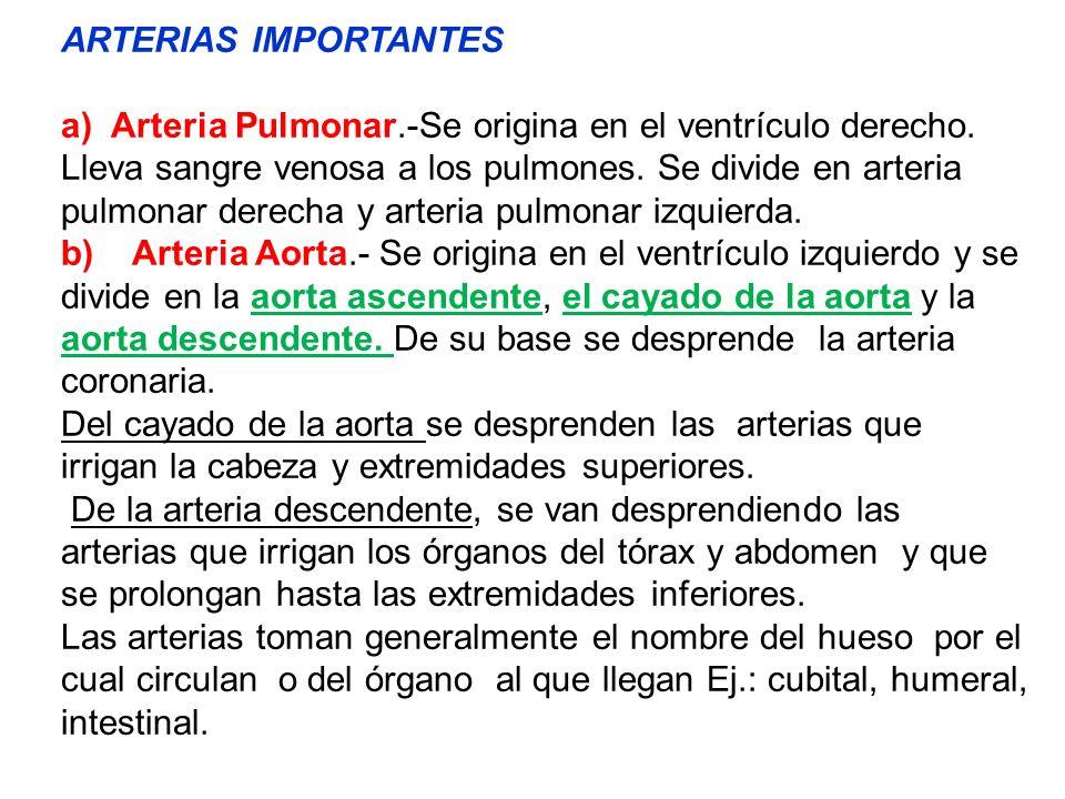 ARTERIAS IMPORTANTES