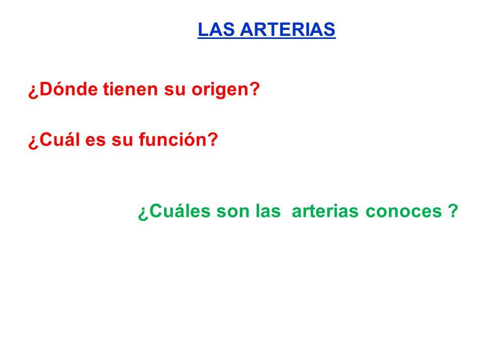 LAS ARTERIAS ¿Dónde tienen su origen ¿Cuál es su función ¿Cuáles son las arterias conoces