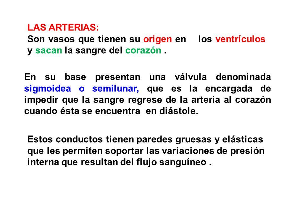 LAS ARTERIAS: Son vasos que tienen su origen en los ventrículos y sacan la sangre del corazón .