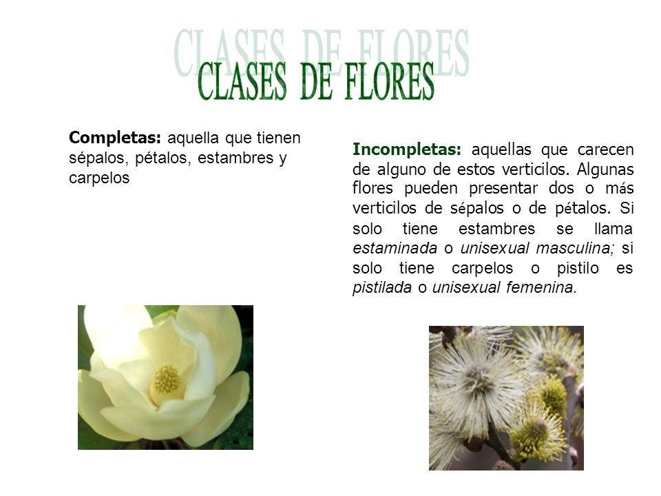 CLASES DE FLORES Completas: aquella que tienen sépalos, pétalos, estambres y carpelos.
