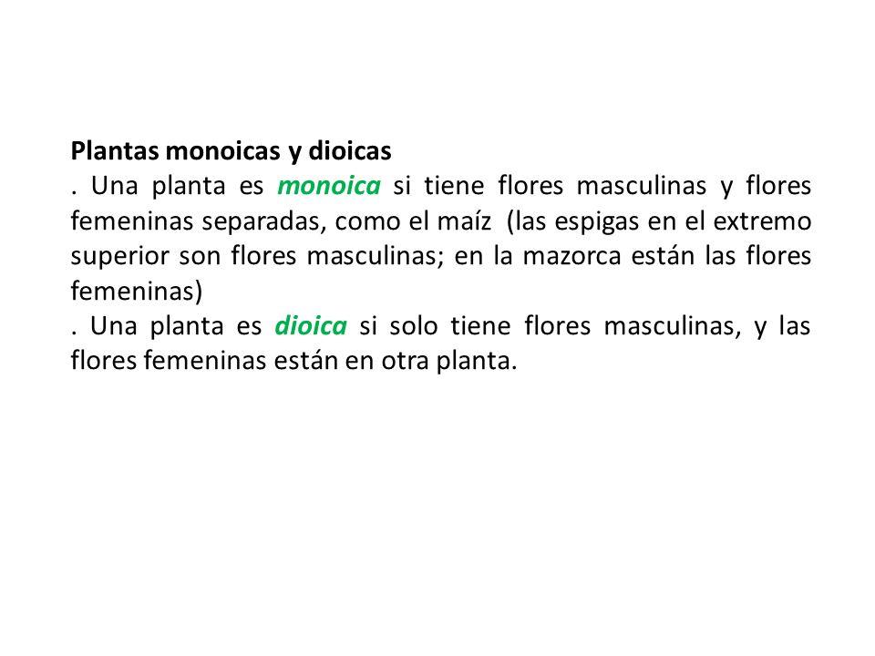 Plantas monoicas y dioicas