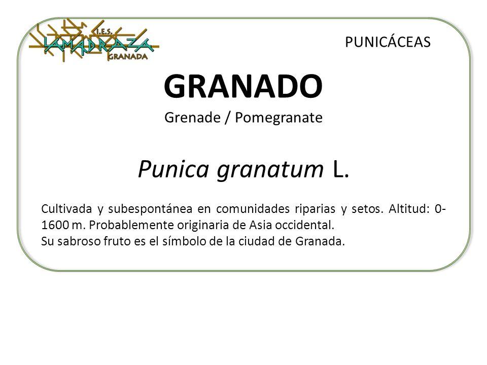 GRANADO Grenade / Pomegranate