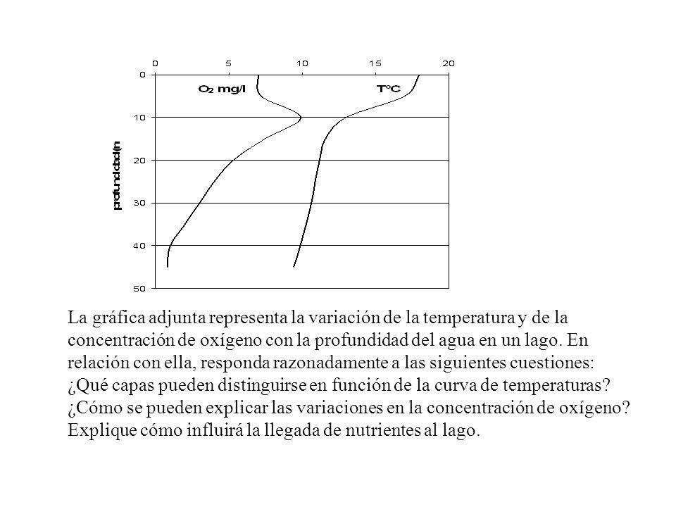 La gráfica adjunta representa la variación de la temperatura y de la concentración de oxígeno con la profundidad del agua en un lago. En relación con ella, responda razonadamente a las siguientes cuestiones: