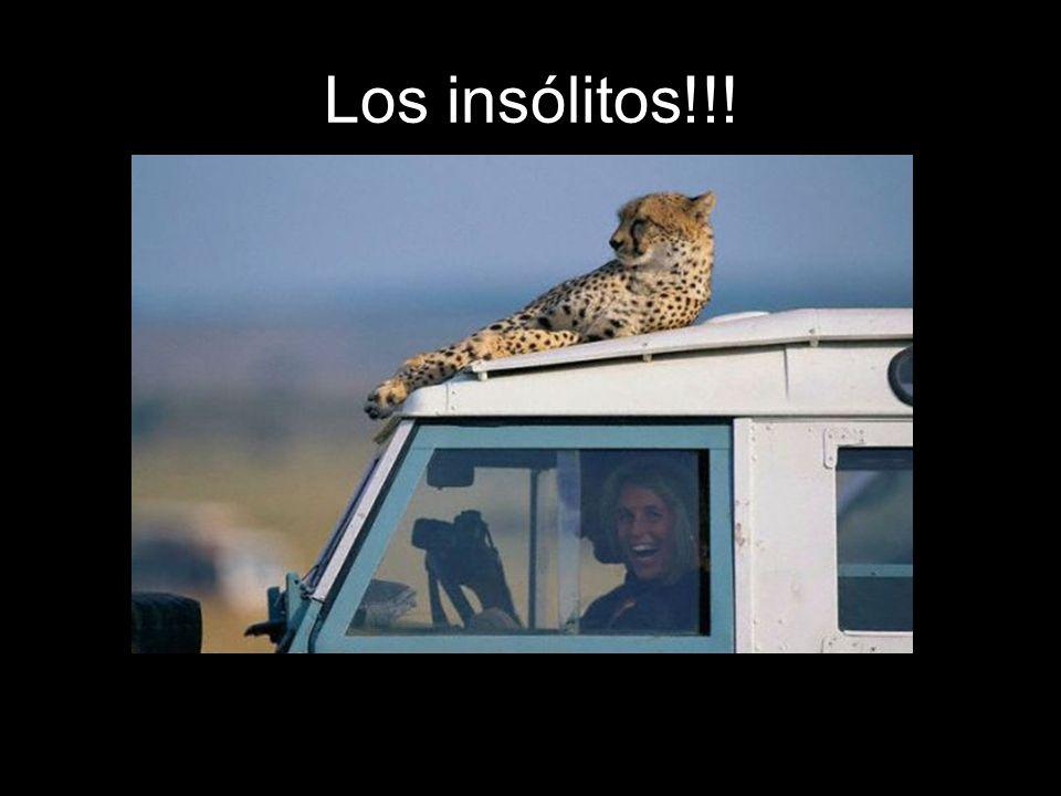 Los insólitos!!!