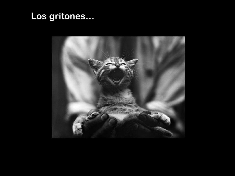 Los gritones…