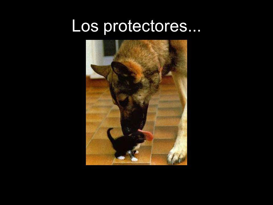 Los protectores...