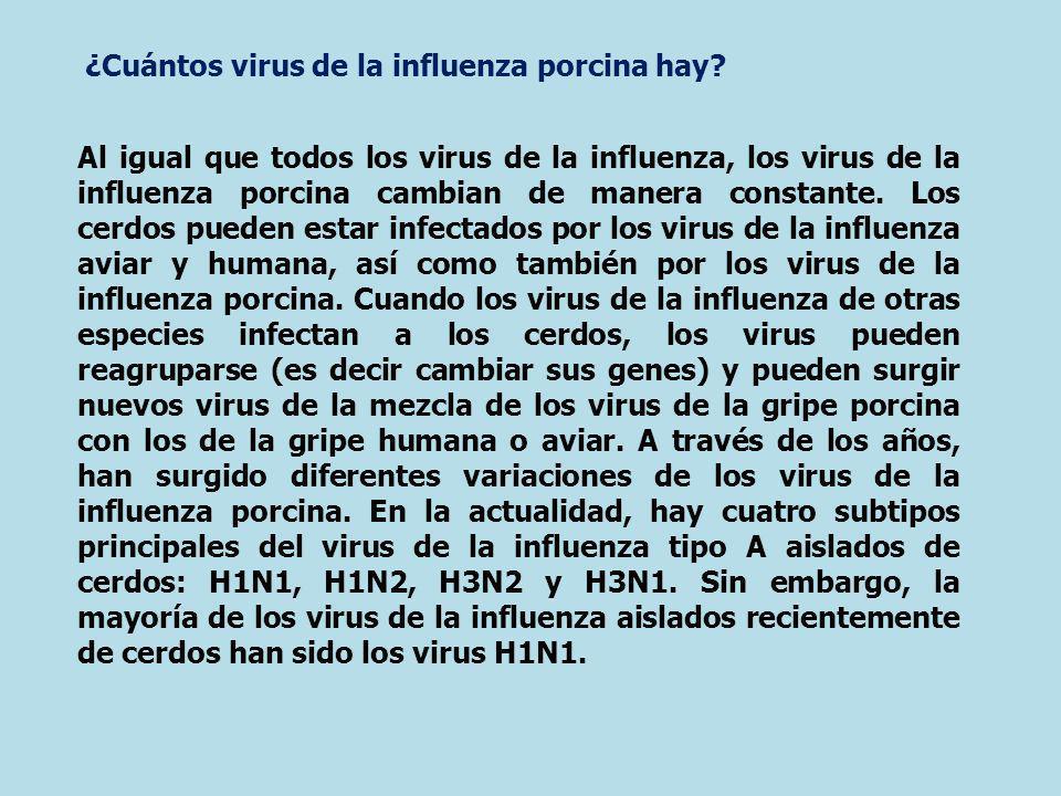 ¿Cuántos virus de la influenza porcina hay