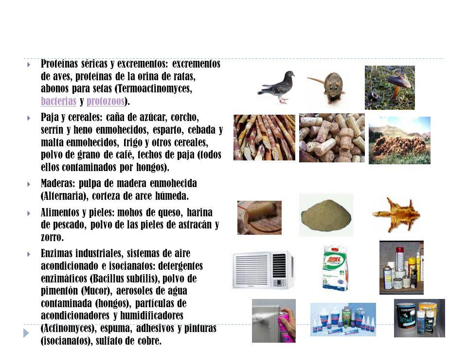 Proteínas séricas y excrementos: excrementos de aves, proteínas de la orina de ratas, abonos para setas (Termoactinomyces, bacterias y protozoos).
