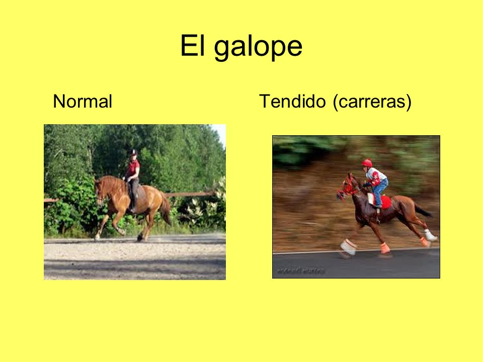 El galope Normal Tendido (carreras)