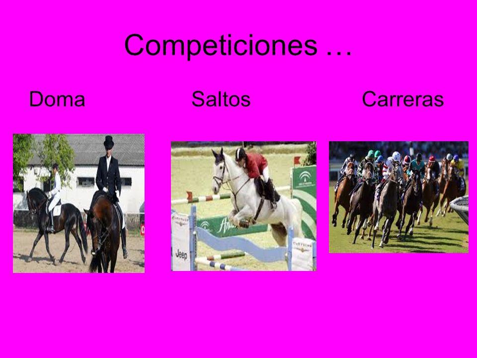 Competiciones … Doma Saltos Carreras