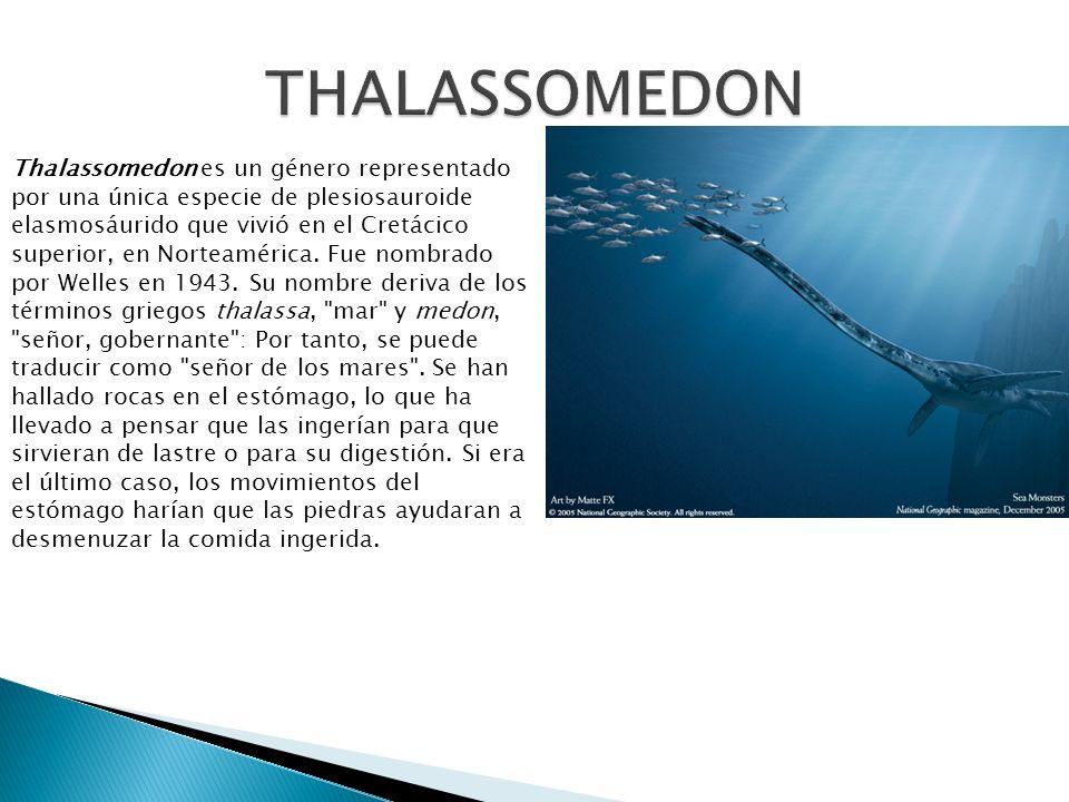 THALASSOMEDON Thalassomedon es un género representado por una única especie de plesiosauroide