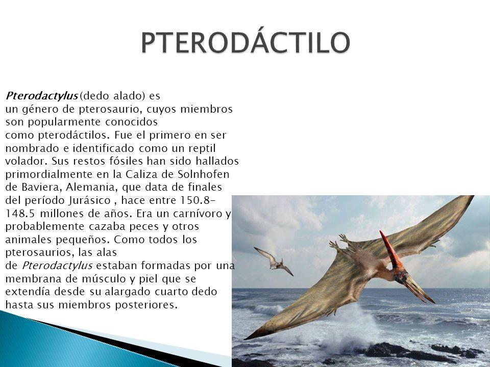 PTERODÁCTILO