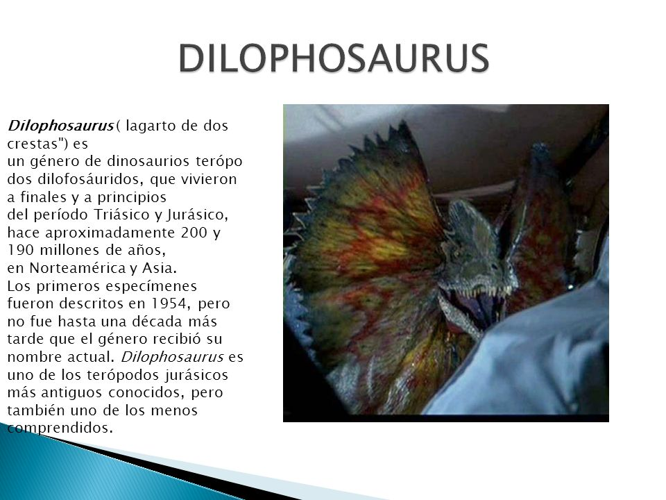 DILOPHOSAURUS Dilophosaurus ( lagarto de dos crestas ) es
