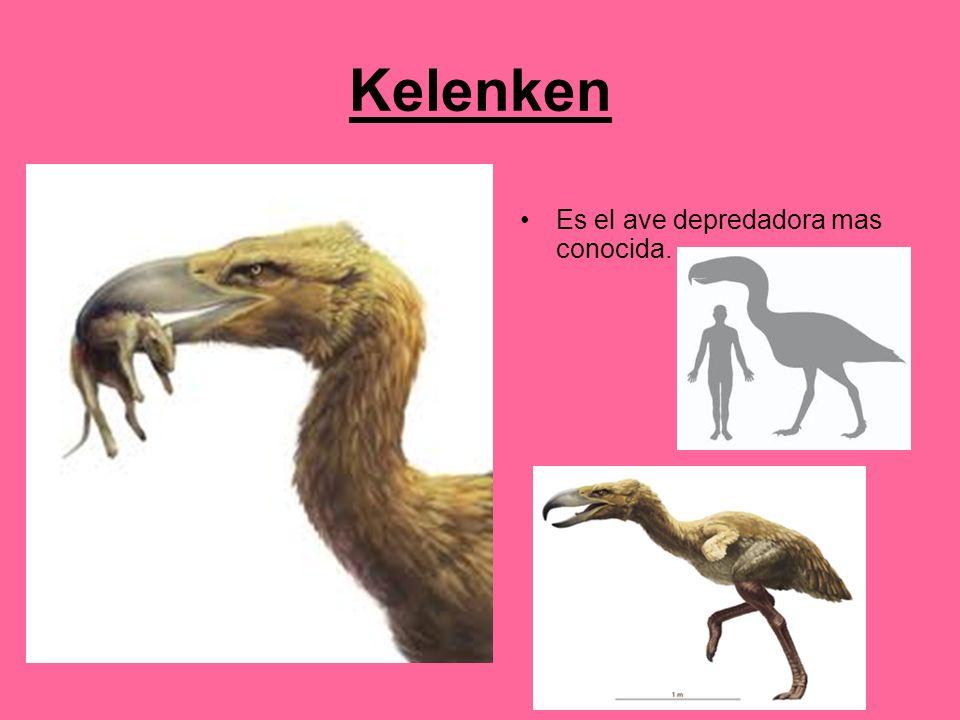 Kelenken Es el ave depredadora mas conocida.