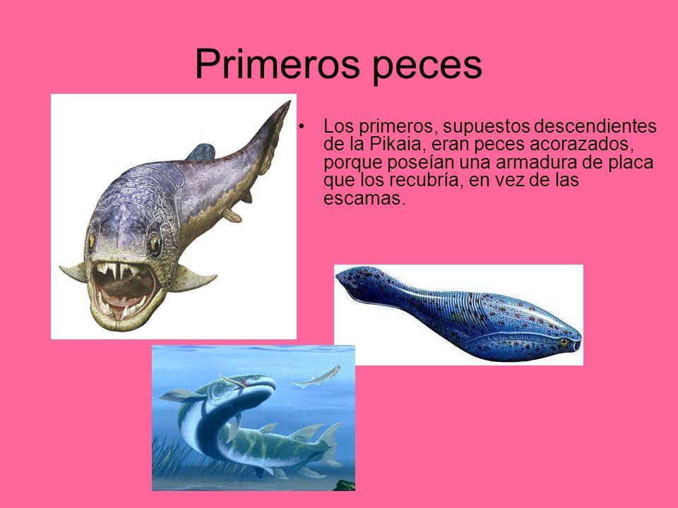 Primeros peces