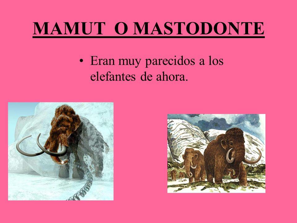 MAMUT O MASTODONTE Eran muy parecidos a los elefantes de ahora.