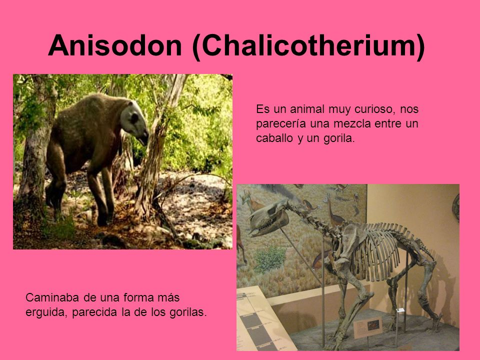 Anisodon (Chalicotherium)