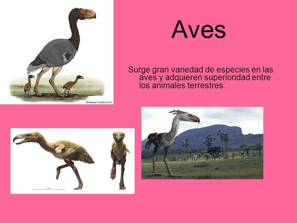AvesSurge gran variedad de especies en las aves y adquieren superioridad entre los animales terrestres.