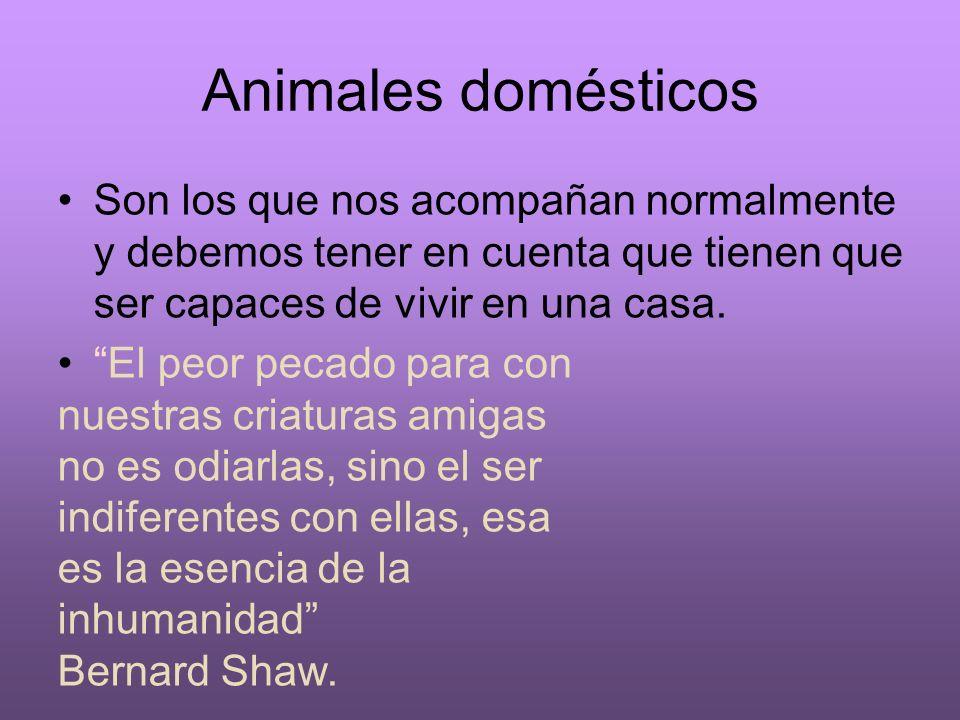 Animales domésticos Son los que nos acompañan normalmente y debemos tener en cuenta que tienen que ser capaces de vivir en una casa.