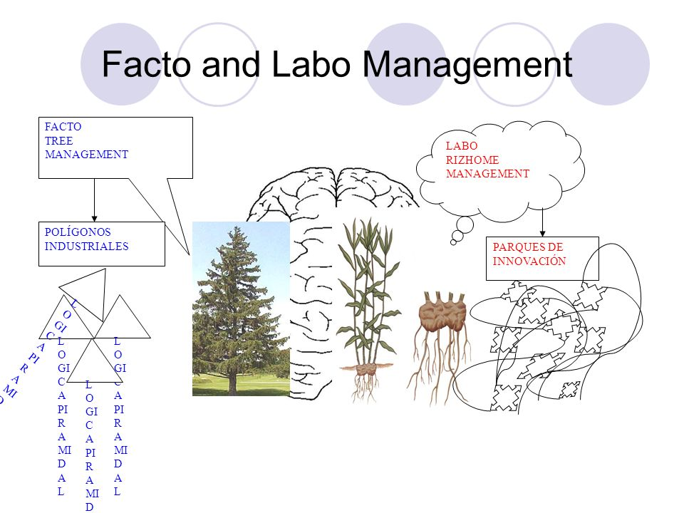 Facto and Labo Management
