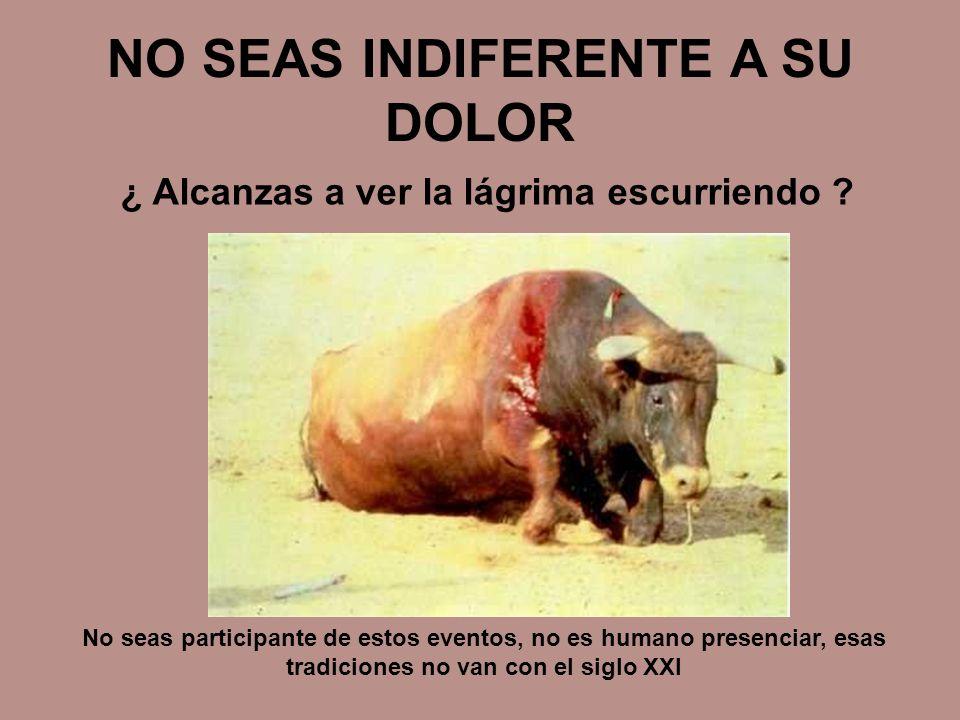 NO SEAS INDIFERENTE A SU DOLOR