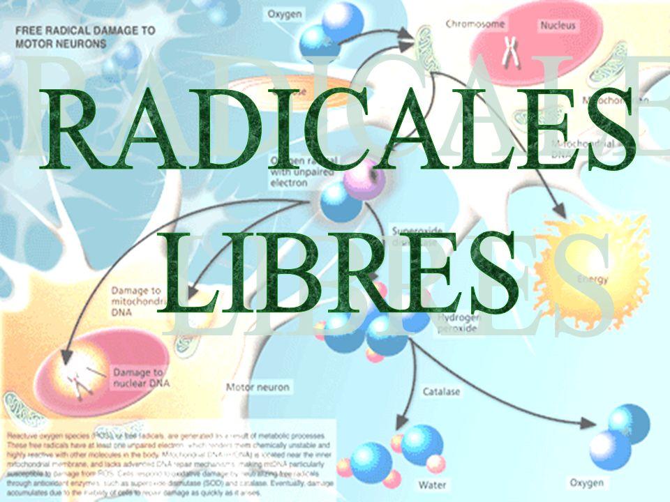 RADICALES LIBRES 24/03/2017