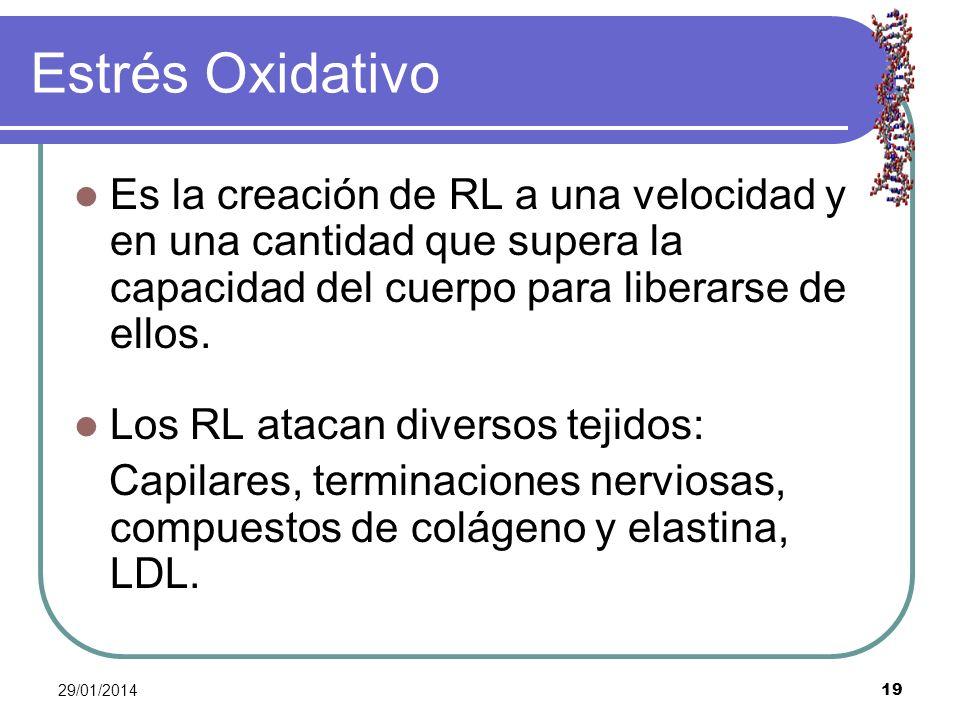 Estrés Oxidativo Es la creación de RL a una velocidad y en una cantidad que supera la capacidad del cuerpo para liberarse de ellos.