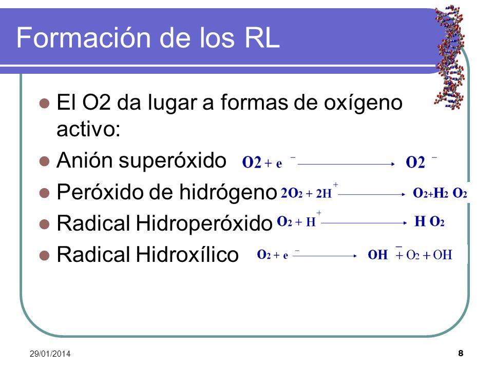 Formación de los RL El O2 da lugar a formas de oxígeno activo: