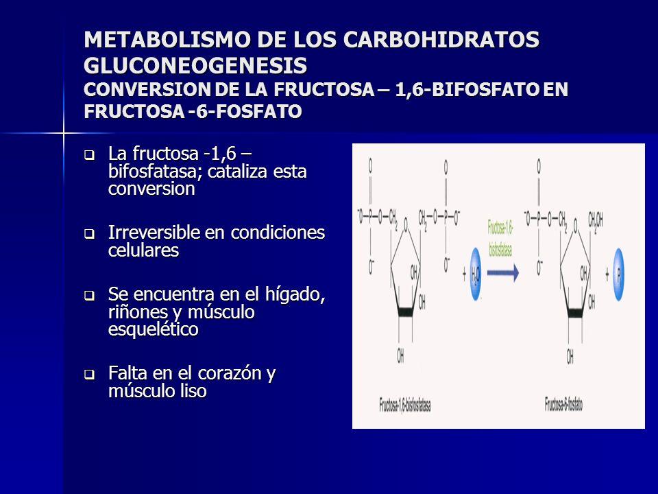 METABOLISMO DE LOS CARBOHIDRATOS GLUCONEOGENESIS CONVERSION DE LA FRUCTOSA – 1,6-BIFOSFATO EN FRUCTOSA -6-FOSFATO