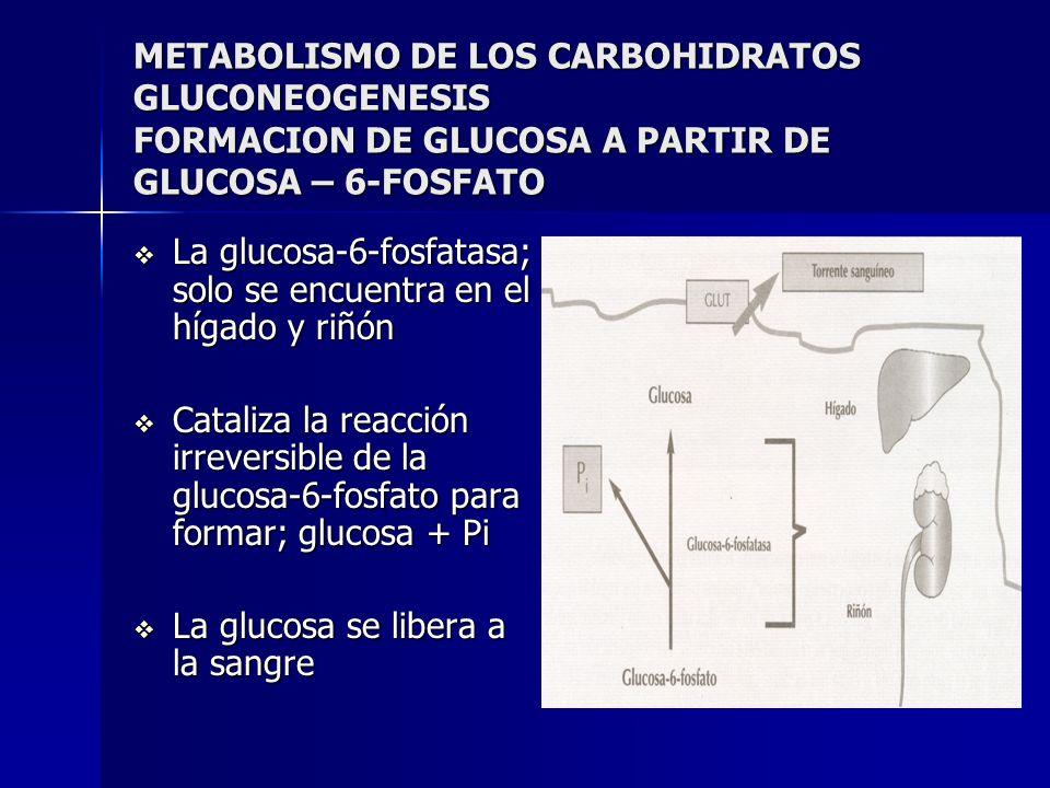 METABOLISMO DE LOS CARBOHIDRATOS GLUCONEOGENESIS FORMACION DE GLUCOSA A PARTIR DE GLUCOSA – 6-FOSFATO