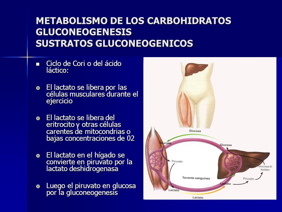 METABOLISMO DE LOS CARBOHIDRATOS GLUCONEOGENESIS SUSTRATOS GLUCONEOGENICOS
