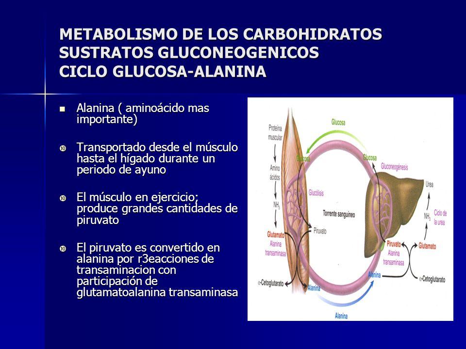 METABOLISMO DE LOS CARBOHIDRATOS SUSTRATOS GLUCONEOGENICOS CICLO GLUCOSA-ALANINA