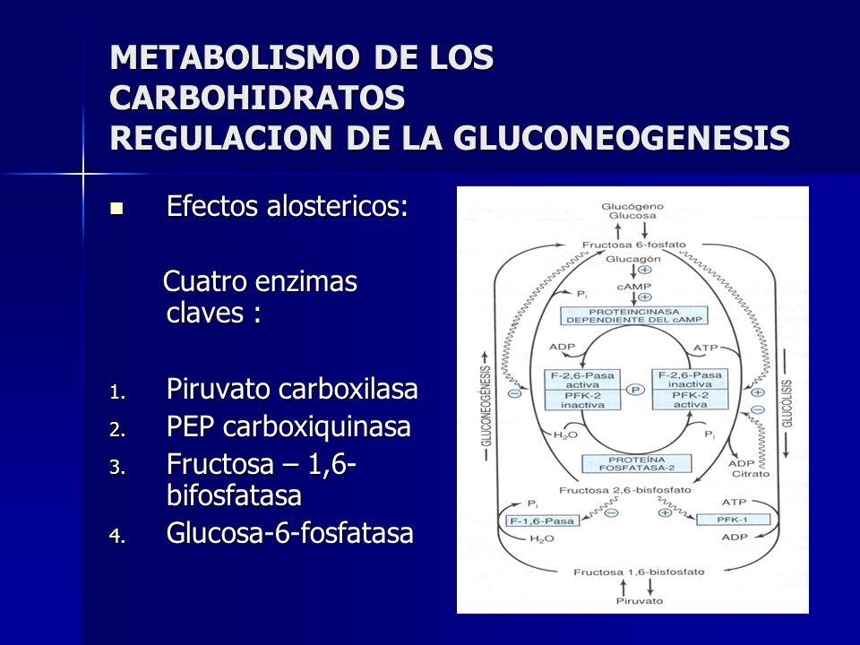 METABOLISMO DE LOS CARBOHIDRATOS REGULACION DE LA GLUCONEOGENESIS