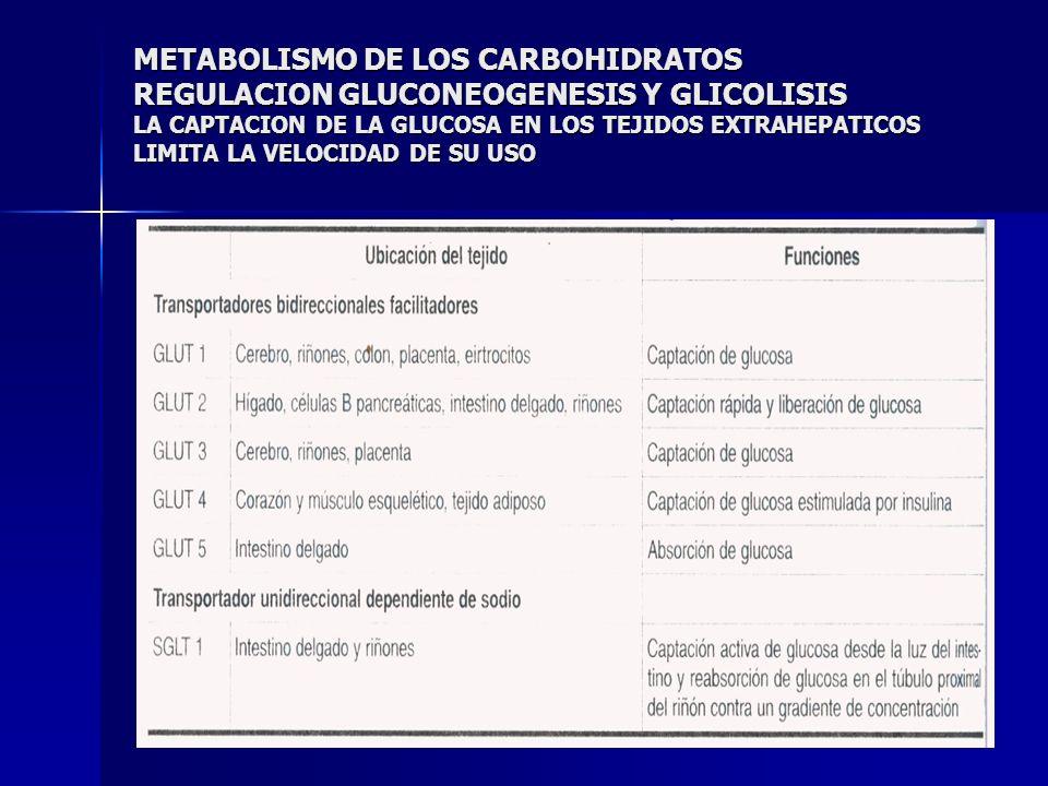 METABOLISMO DE LOS CARBOHIDRATOS REGULACION GLUCONEOGENESIS Y GLICOLISIS LA CAPTACION DE LA GLUCOSA EN LOS TEJIDOS EXTRAHEPATICOS LIMITA LA VELOCIDAD DE SU USO