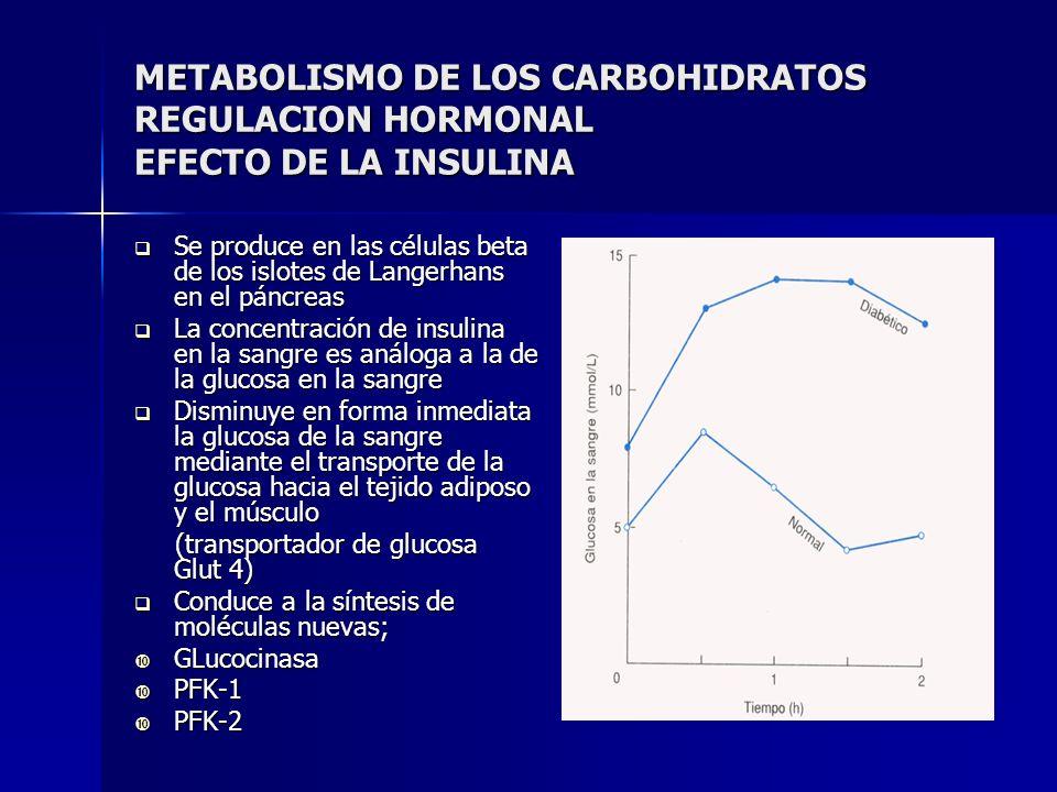 METABOLISMO DE LOS CARBOHIDRATOS REGULACION HORMONAL EFECTO DE LA INSULINA