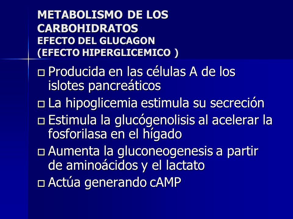 Producida en las células A de los islotes pancreáticos