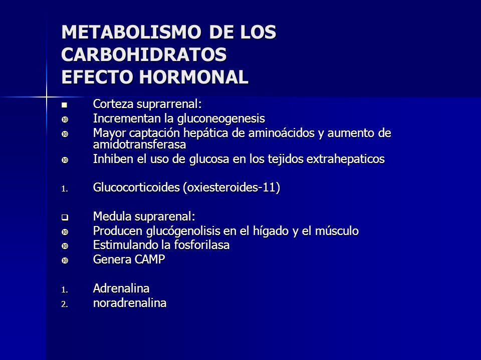 METABOLISMO DE LOS CARBOHIDRATOS EFECTO HORMONAL