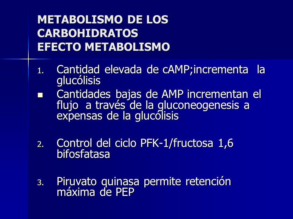 METABOLISMO DE LOS CARBOHIDRATOS EFECTO METABOLISMO