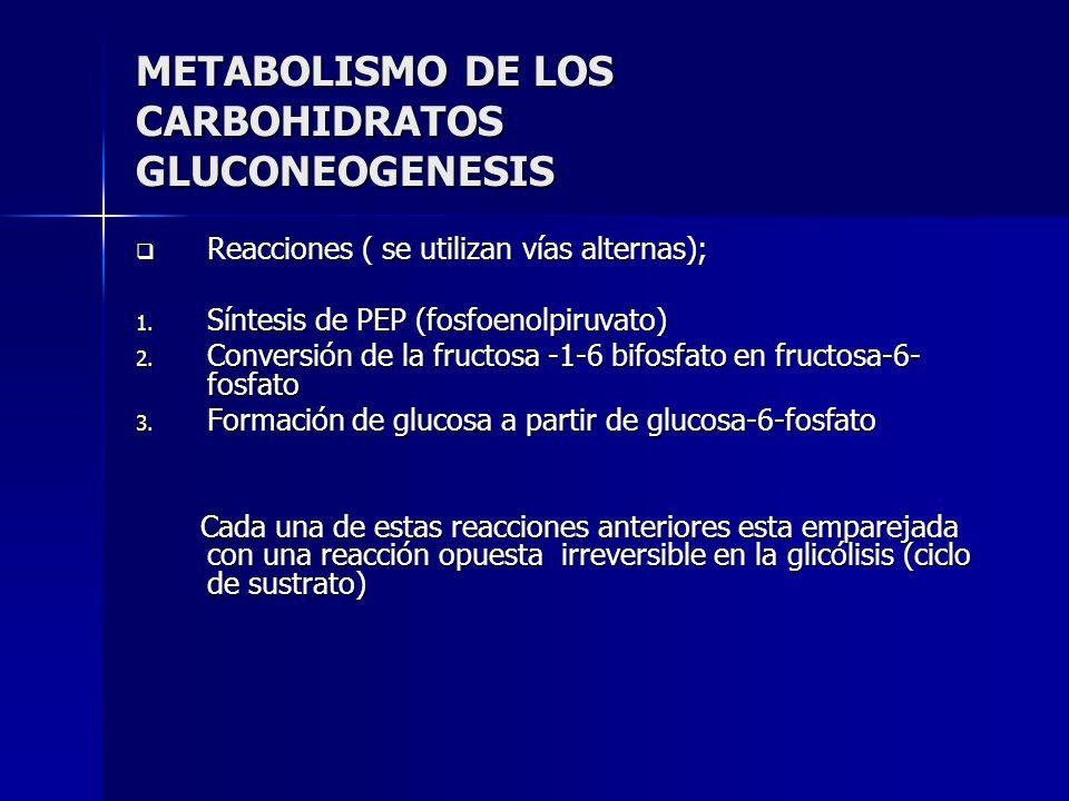METABOLISMO DE LOS CARBOHIDRATOS GLUCONEOGENESIS